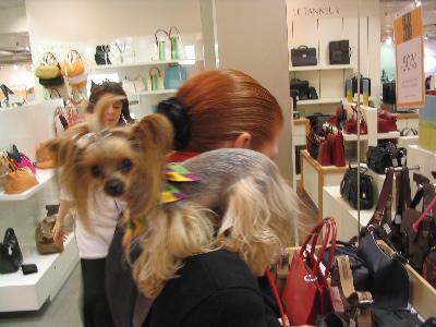 Lucy shoulder 2.jpg
