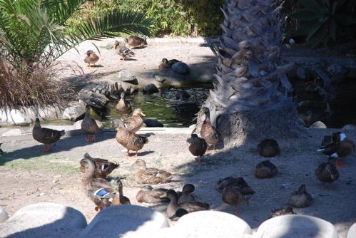 DuckDayAfternoon.jpg