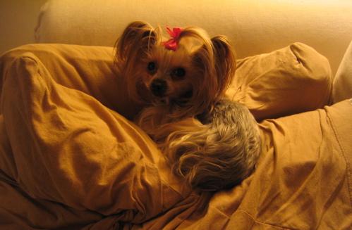 hounddog.jpg