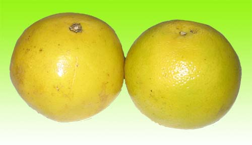 nnicegrapefruits copy.jpg