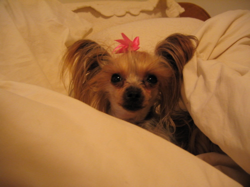 sleepingdoggie2.jpg