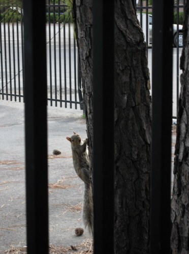 squirrelinterrup.jpg